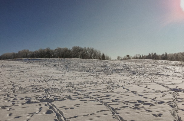 Snow covered field with tracks