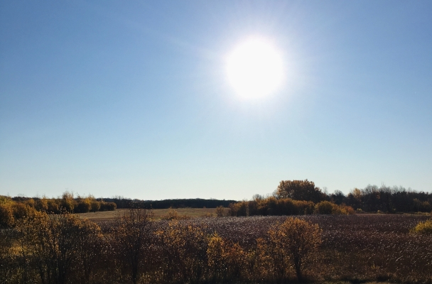 A field with trees in the fall as the sun rises above